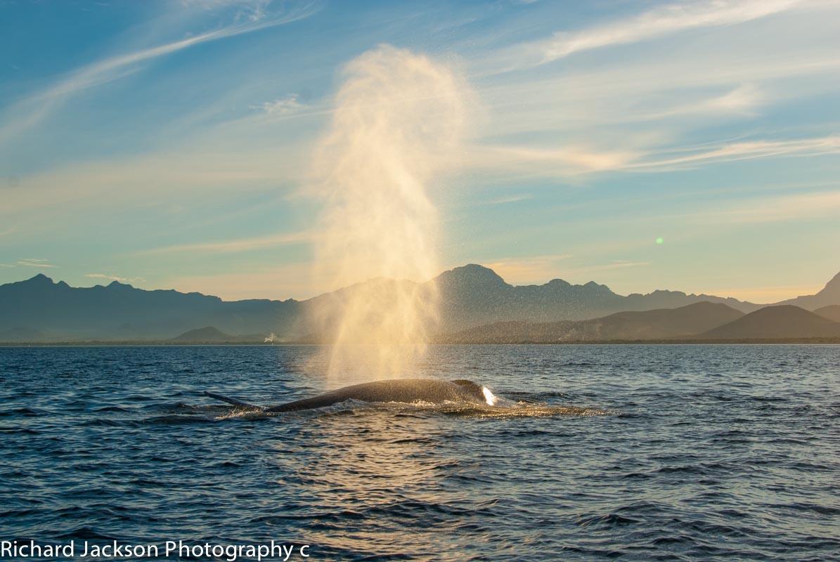 Whales in Loreto. misionloreto.com