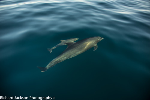 Playing with Dolphins in the Loreto Bay Marine Park DSC_8750