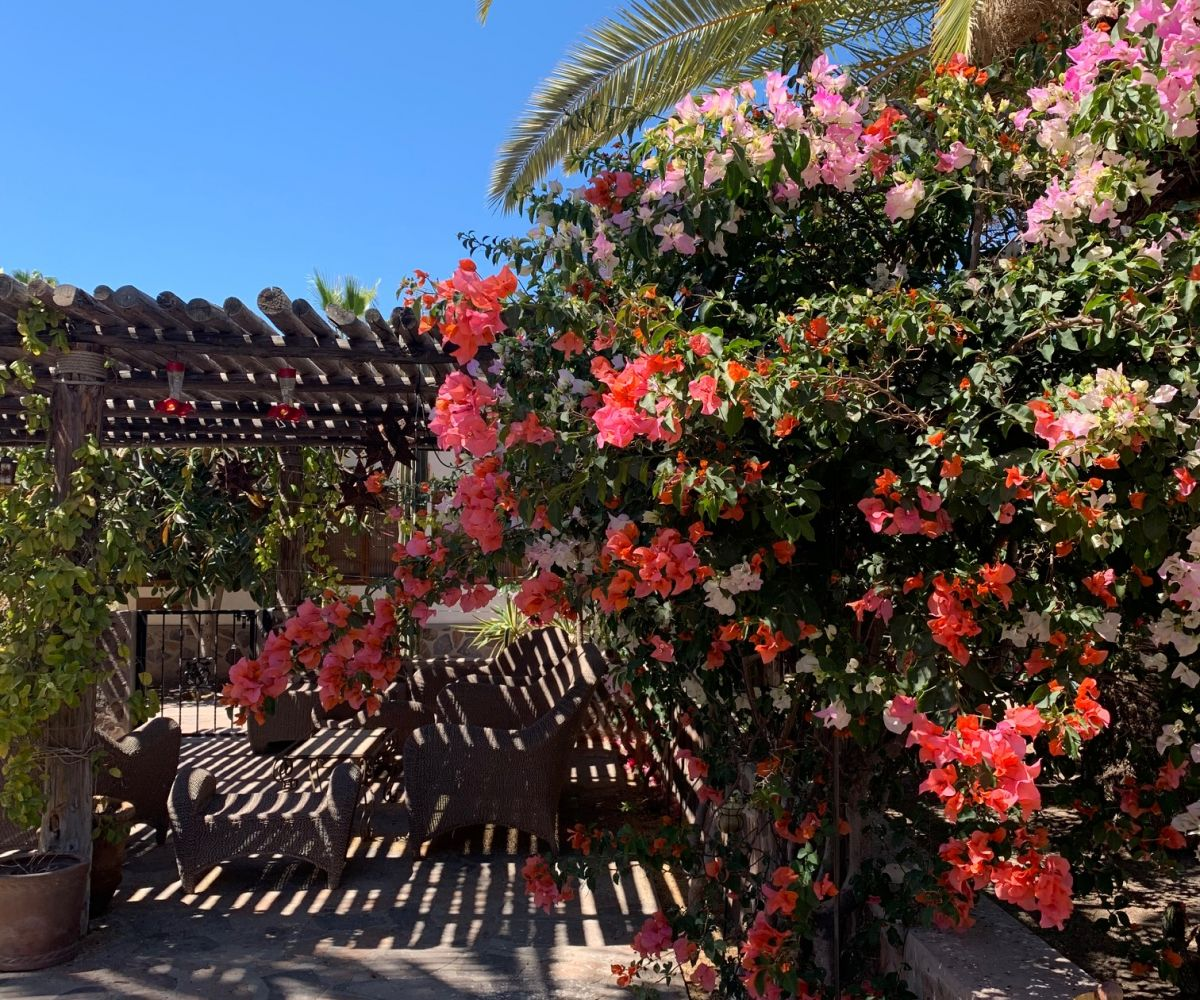 2 bed/2bath casa in private community: flowering bouganvilla.